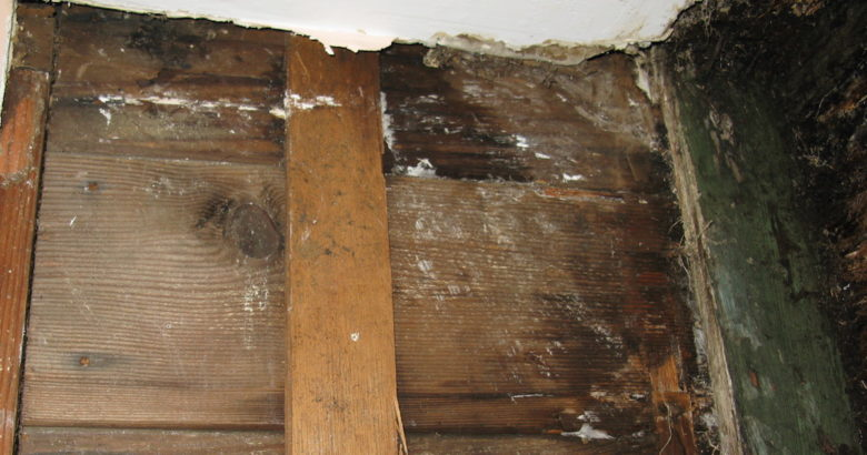 wall with mold damage that is not covered by a Massachusetts homeowner's insurance policy